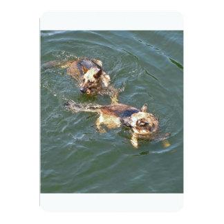 german-shepherds in water.png card