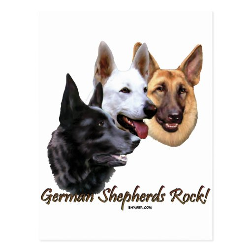 German Shepherds Rock Trio Postcard