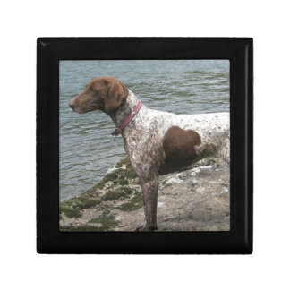 German Short Haired Pointer by a Stream Gift Box