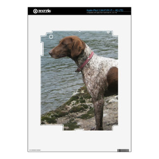 German Short Haired Pointer by a Stream iPad 3 Skin