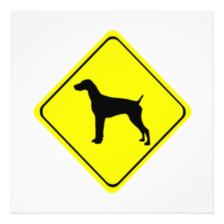 German short-Haired Pointer Dog Crossing Sign Photo
