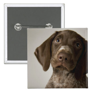German Short-Haired Pointer puppy 2 Inch Square Button