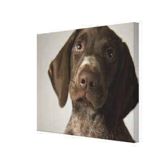 German Short-Haired Pointer puppy Canvas Print