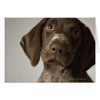 German Short-Haired Pointer puppy Card