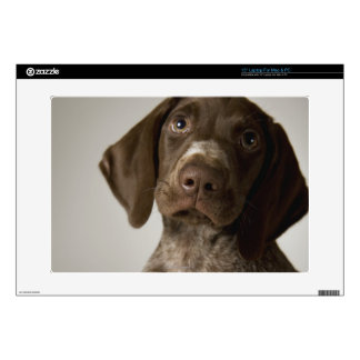 German Short-Haired Pointer puppy Decals For Laptops
