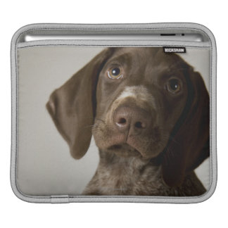 German Short-Haired Pointer puppy Sleeves For iPads