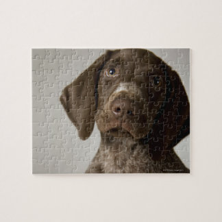 German Short-Haired Pointer puppy Jigsaw Puzzle