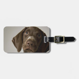 German Short-Haired Pointer puppy Luggage Tag