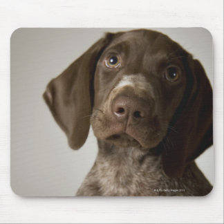 German Short-Haired Pointer puppy Mouse Pad