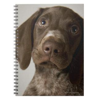 German Short-Haired Pointer puppy Spiral Note Books