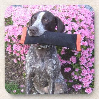 German Shorthair Pointer dog coasters