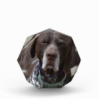 German Shorthaired Pointer Dog Award