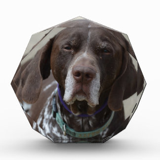 German Shorthaired Pointer Dog Award