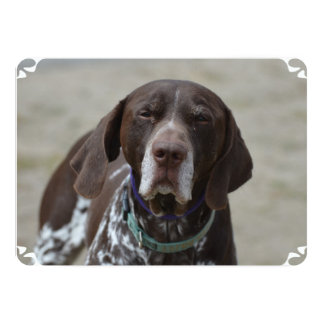 German Shorthaired Pointer Dog Card