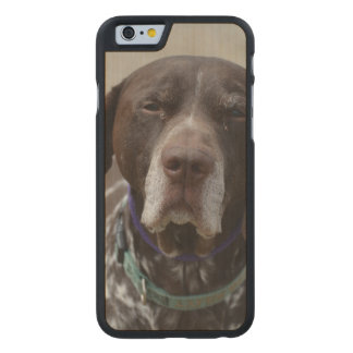 German Shorthaired Pointer Dog Carved Maple iPhone 6 Slim Case