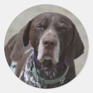 German Shorthaired Pointer Dog Classic Round Sticker