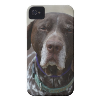 German Shorthaired Pointer Dog iPhone 4 Case-Mate Case