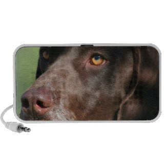 German Shorthaired Pointer doodle speakers