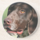 German Shorthaired Pointer Drink Coasters