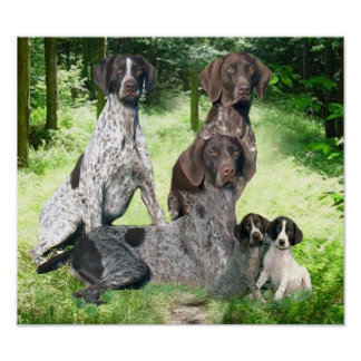 German Shorthaired Pointer Family Print