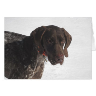 German Shorthaired Pointer in the Snow Card