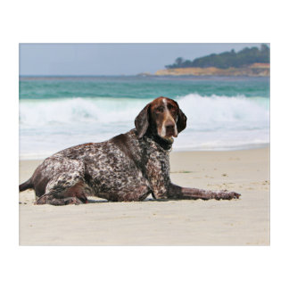 German Shorthaired Pointer - Luke - Riley Acrylic Wall Art