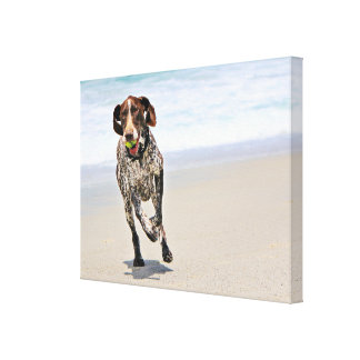 German Shorthaired Pointer - Luke - Riley Canvas Print