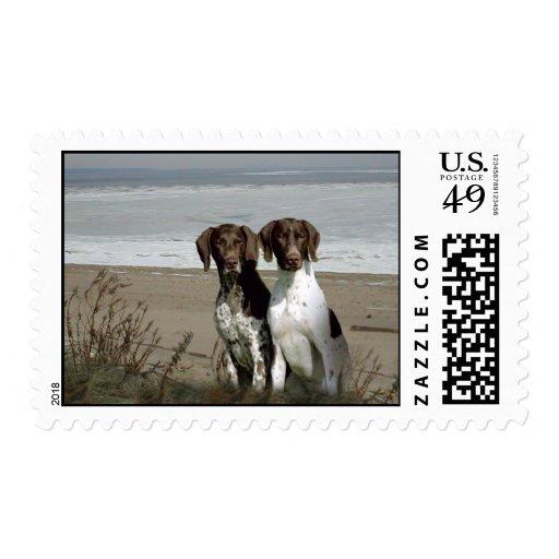 German Shorthaired Pointer Postage Stamp
