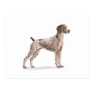 German Shorthaired Pointer Post Card