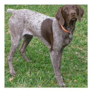 German Shorthaired Pointer Poster 5.25x5.25 Square Paper Invitation Card