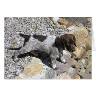 German Shorthaired Pointer Puppy Card