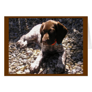 German Shorthaired Pointer Puppy Chillin' Card