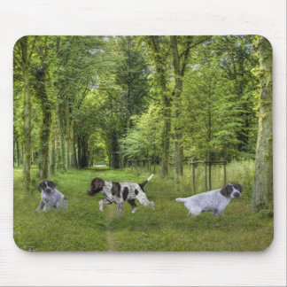 German Shorthaired Pointer Pups Mousepad