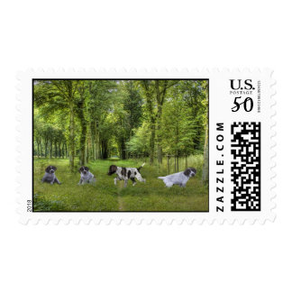 German Shorthaired Pointer Pups Postage Stamp