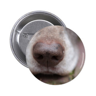 German shorthaired pointers nose 2 inch round button