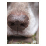 German shorthaired pointers nose flyer design