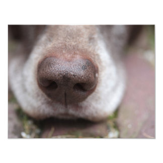 German shorthaired pointers nose 4.25x5.5 paper invitation card