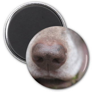 German shorthaired pointers nose 2 inch round magnet