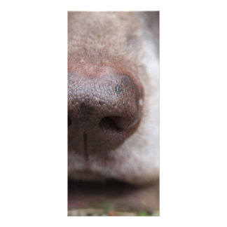 German shorthaired pointers nose personalized rack card