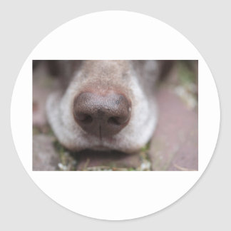 German shorthaired pointers nose round stickers