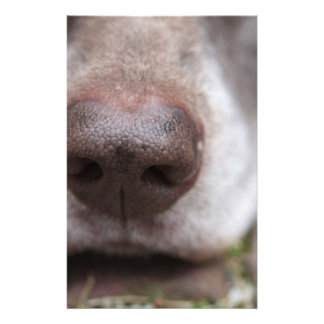 German shorthaired pointers nose stationery