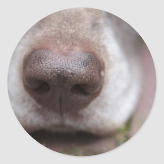German shorthaired pointers nose classic round sticker