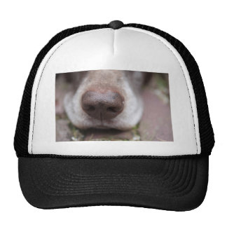 German shorthaired pointers nose trucker hat