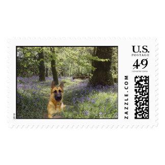 German Shpherd Forest Postage