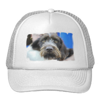 German Wire Haired Pointer Baseball Hat