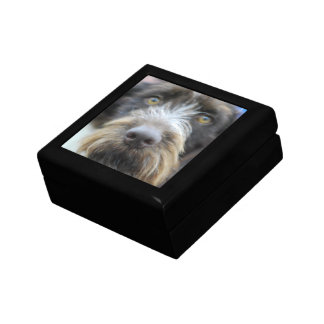 German Wire Haired Pointer Gift Box