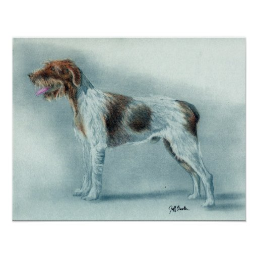 German Wirehaired Pointer Dog Pointer Posters