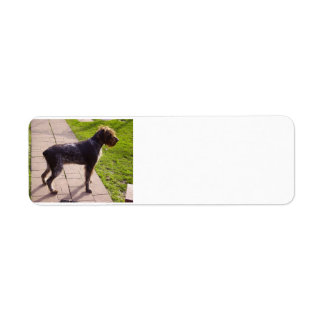 German_Wirehaired_Pointer full.png Etiqueta De Remite