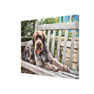 German Wirehaired Pointer - Lexy Canvas Print