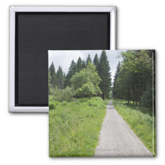Germany, Thuringia, path in forest 2 Inch Square Magnet